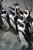 企鹅 免版税库存图片