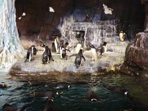 企鹅 免版税库存照片