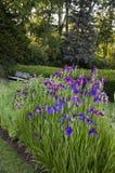伊丽莎白公园十四-美丽的虹膜 免版税库存照片