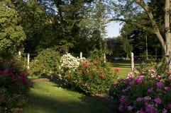 伊丽莎白公园-美丽的玫瑰园 免版税库存照片