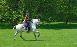 伊丽莎白女王的服装的人在疾驰在树前面的一个白马 库存照片