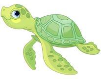 巴伊亚巴西coroa海岛海龟vermelha
