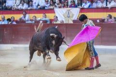 伊冯与与海角在bullrin的Fandiño一头勇敢的公牛战斗 库存图片