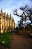 伊利大教堂和树 图库摄影