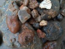 伊利湖岩石和银朱的河Septarian 库存图片