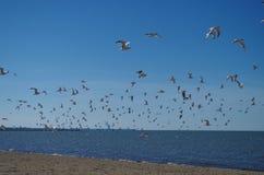 伊利湖-沙子海滩和海鸥 免版税图库摄影
