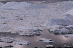 伊卢利萨特Icefjord格陵兰 图库摄影