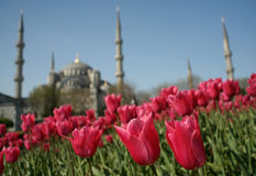 伊斯坦布尔春天 库存图片