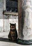 伊斯坦布尔猫和柱子的蓝色清真寺 库存照片