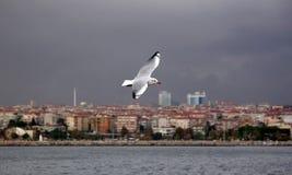 伊斯坦布尔生活海军陆战队员 免版税库存图片