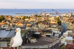伊斯坦布尔视域  城市视图 免版税库存图片