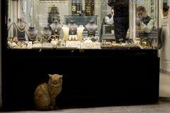 伊斯坦布尔,土耳其- 2015年12月28日:在一个金银手饰店前面的姜猫在盛大义卖市场 免版税图库摄影