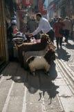 伊斯坦布尔,土耳其- 2015年11月4日:羊毛衣裳销售在购物的处所的伊斯坦布尔 免版税图库摄影