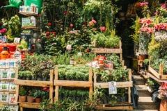 伊斯坦布尔, 2017年6月15日:园艺中心或花店以绿色植物和俏丽的花品种待售 在旁边 库存图片