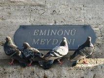 伊斯坦布尔Eminonu广场,小组做了四只鸽子 免版税库存照片