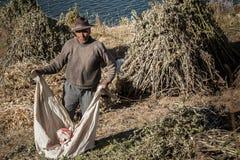 伊斯拉的在Titicaca湖的del Sol不明身份的玻利维亚的工作者,世界的3808 mt -玻利维亚最大的高空湖 库存图片