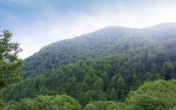伊杰万范围的树木丛生的谷 雾山 从修道院Haghartsin的看法 的臂章 免版税库存照片