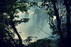 伊瓜苏瀑布,密西昂奈斯,阿根廷 免版税库存照片