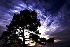 伊甸园结构树 库存照片
