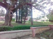 伊巴丹大学  免版税库存照片