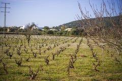 伊维萨岛的领域在春天,西班牙 免版税库存图片