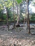 伍德斯托克供游泳的深水潭 库存照片