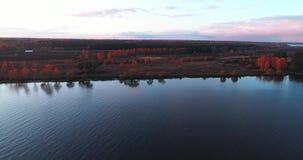 伏尔加河在日出鸟瞰图quadcopter的秋天在森林4k 股票视频