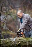伐木工人与锯一起使用 免版税库存照片