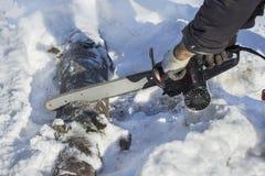 伐木工人切开一个树枝成片断在雪的一个森林里 锯的击倒的树到片断里 免版税图库摄影