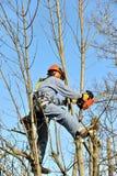 伐木工人 免版税图库摄影