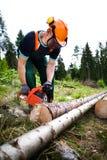 伐木工人 图库摄影
