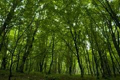休尼克省省的亚美尼亚森林 免版税图库摄影