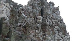 休息和飞行在Salto del Gitano,西班牙附近的兀鹫 股票录像