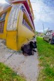 休息在一个大厅里的室外观点的许多山羊在镇在塔石难民解决在博克拉,尼泊尔,白点 免版税库存照片