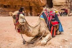 休息在古城Petra (约旦)的骆驼 免版税库存图片