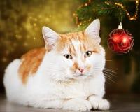 休息在圣诞树的逗人喜爱的红色和白色猫 免版税库存图片