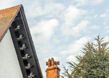 休息在屋顶上面椽木的鸽子 库存照片
