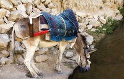 休息在岩石的驴 库存照片