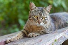 休息在庭院里的猫 库存图片
