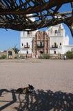 休息在树荫下在圣泽维尔del Bac西班牙宽容使命图森亚利桑那的小犬座 免版税库存照片