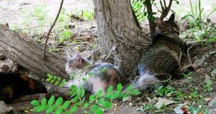 休息在树附近的野生猫自豪感  影视素材