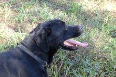 休息在森林里的狗 免版税库存照片