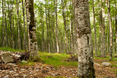 休息在森林 库存图片