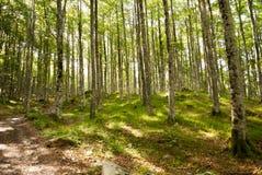 休息在森林 库存照片