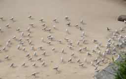 休息在海滩一边的小组海鸥避免冷风 库存照片