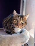 休息在猫树的猫 免版税库存图片