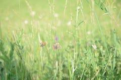 休息在草甸的春天蝴蝶 图库摄影