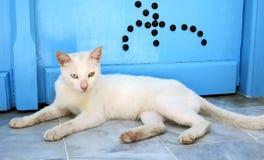 休息在门附近的街道猫在西迪布赛义德突尼斯 免版税库存图片