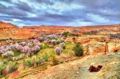 休息在Asif Ounila谷的巴巴里人人在高阿特拉斯山脉,摩洛哥 库存照片