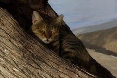 休息在tamarell树的树干的猫 库存图片